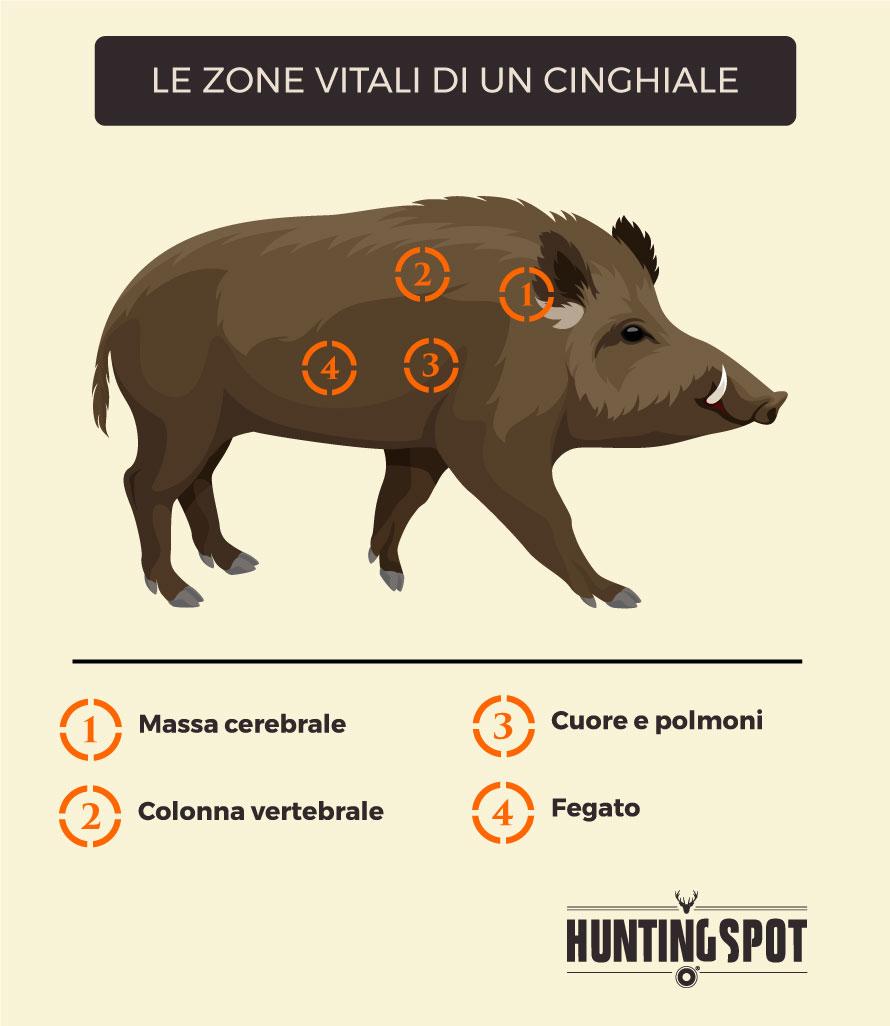 Dove-Colpire-Cinghiale-Zone-Vitali-1