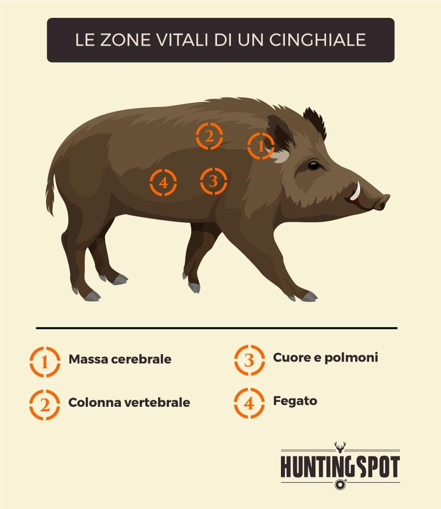 Dove-Colpire-Cinghiale-Zone-Vitali.jpg