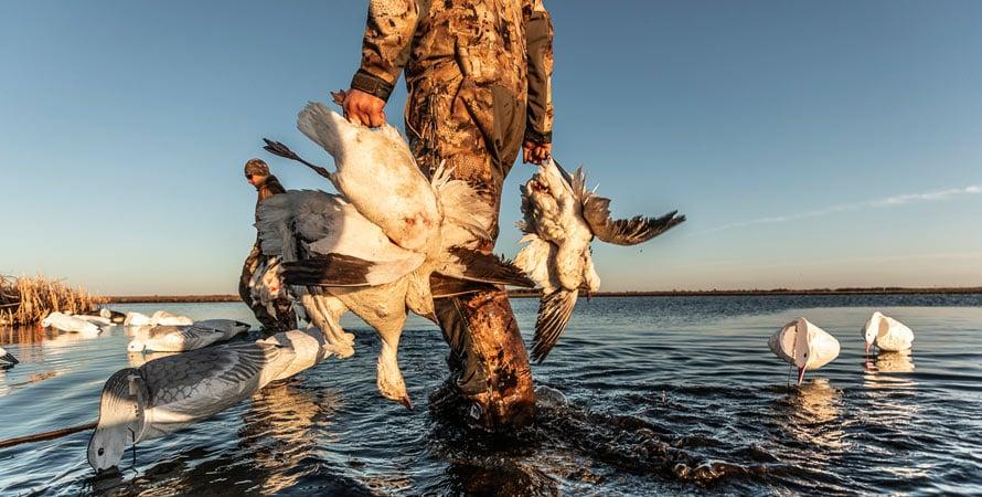 Geese-Hunting-Water