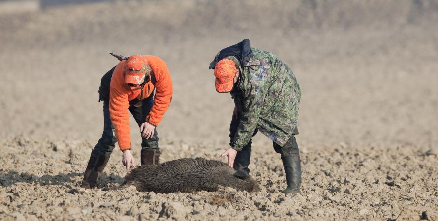caccia-al-cinghiale-cacciatori