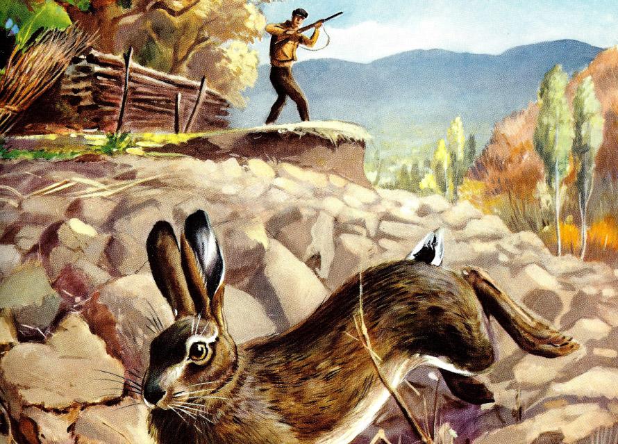 caccia-lepre-baschieri