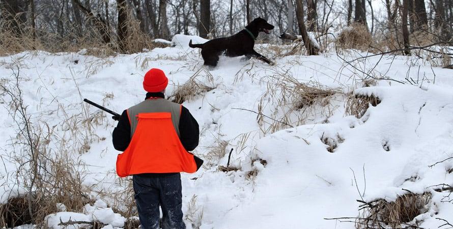 cacciare-fagiano-stagione-avanzata.jpg