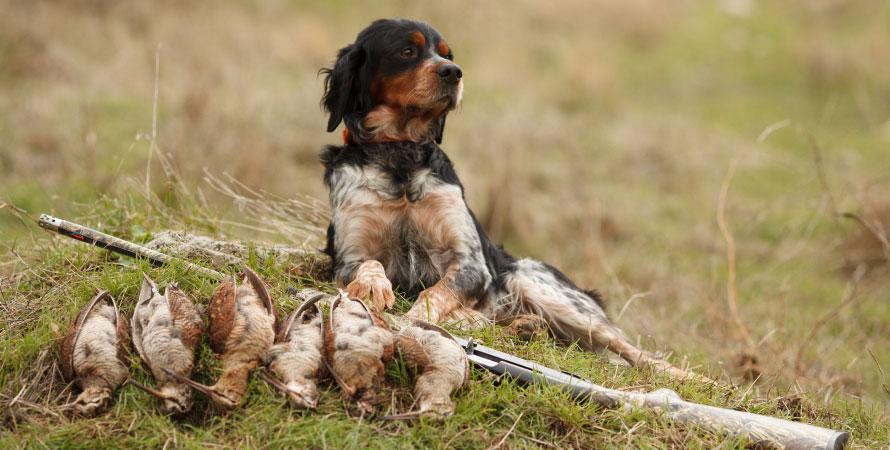 cane-caccia