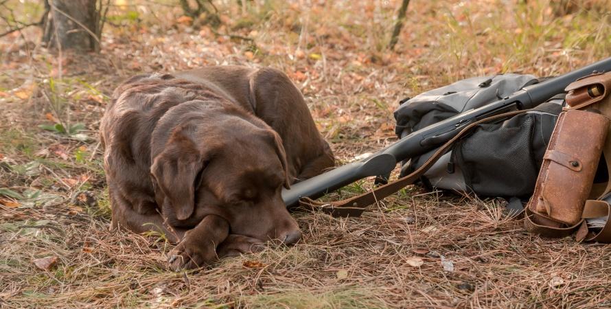 cane-da-caccia-dorme