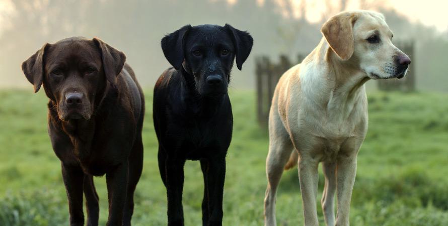 cani-da-caccia-tre
