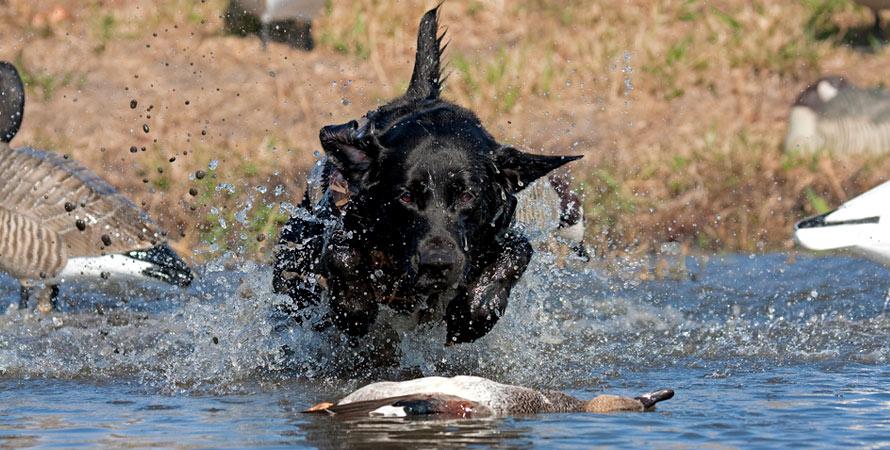 pattern-shotgun-duck-hunting.jpg