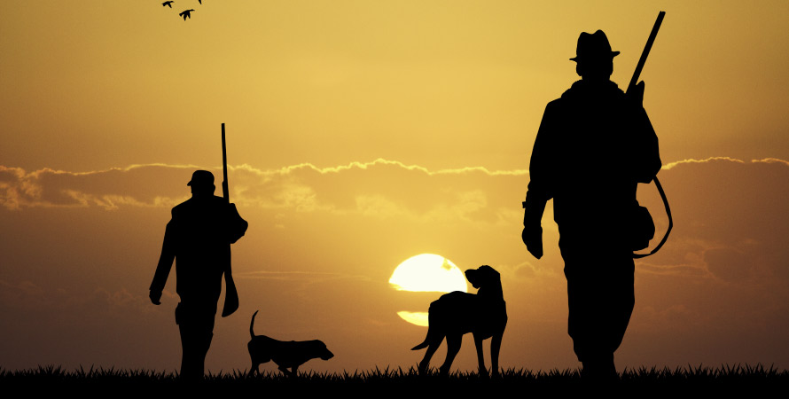setter-inglese-cacciatori