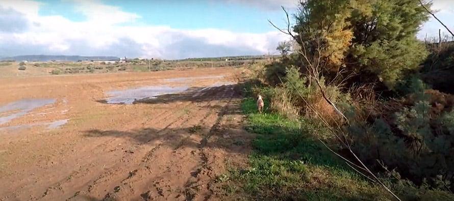 terreno-caccia-beccaccino