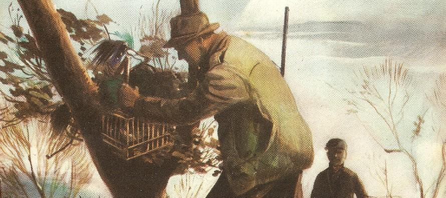 Caccia al capanno coi richiami vivi: tordi, sasselli, merli e cesene