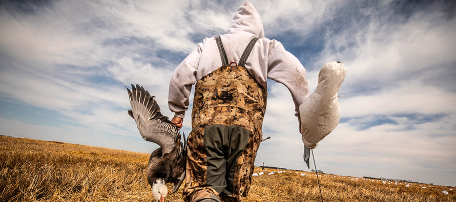 Geese-Hunting-With-B&P-Ammo