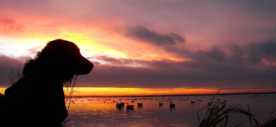 caccia-agli-acquatici-con-cane-tramonto-1.jpg