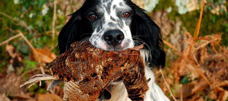caccia-beccaccia-cani-da-ferma